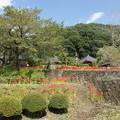 写真: 常楽寺遠景