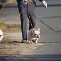 pz1345 散歩犬