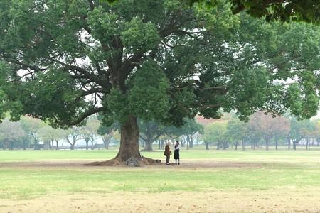 2014.11.01 熊本 熊本城 大きな木の下で
