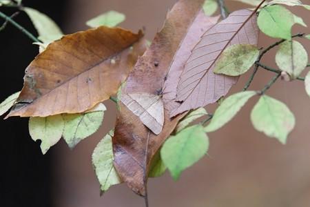 2014.11.30 瀬谷市民の森 フユシャク