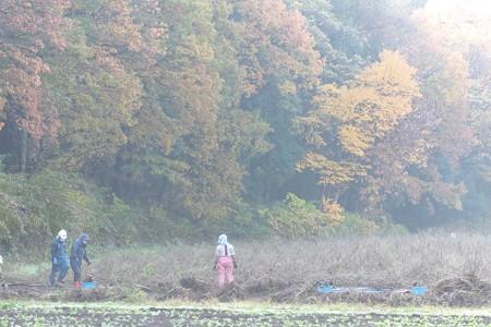 2014.11.30 追分市民の森 朝靄に秋桜畑整備