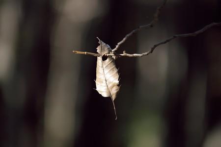 2014.12.15 瀬谷市民の森 落ちない葉