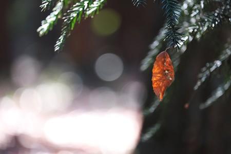 2015.01.08 瀬谷市民の森 枯葉