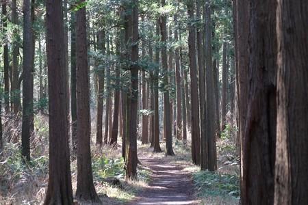 2015.01.28 追分市民の森 散歩道