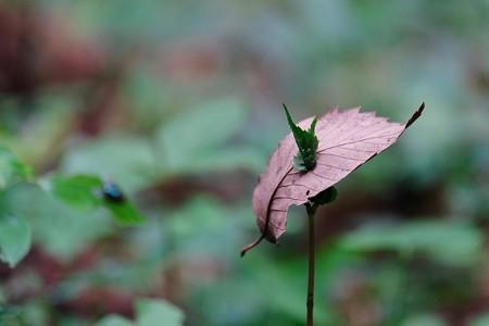 2017.05.14 瀬谷市民の森 枯葉 ニューファッショ