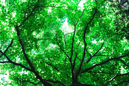 2017.05.23 瀬谷市民の森 森の日傘