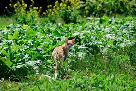 2017.05.29 追分市民の森 おばあの畑と猫