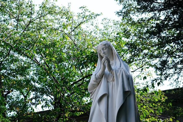 2017.09.29 カトリック山手教会 マリア像