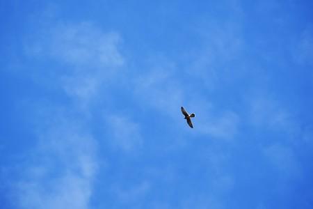 2017.10.01 追分市民の森 秋空に猛禽類