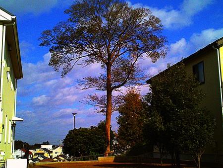 2017.11.13 隣町 空き地に木