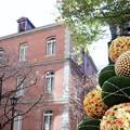写真: 2017.11.21 丸の内ブリックスクエア 桜とChristmas tree