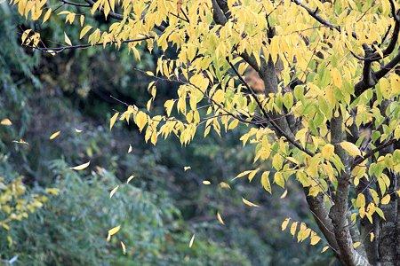 2009.11.28 和泉川 枯葉