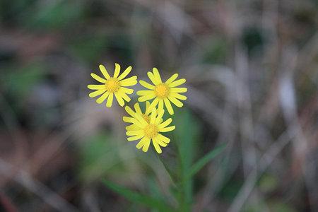 2009.12.05 和泉川 野の花