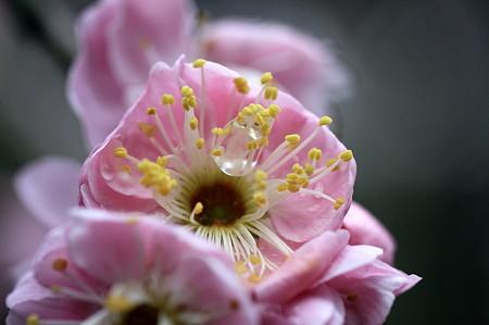 2010.03.05 鎌倉 宝戒寺 梅