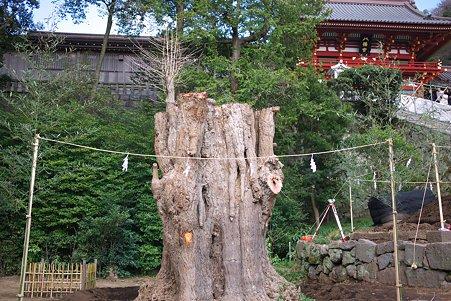 2010.03.19 鎌倉八幡宮 大銀杏-1