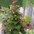 ジブリのクリスマス