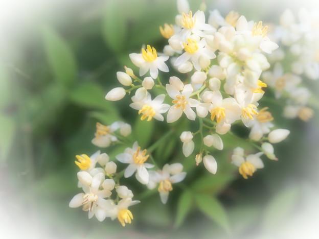 難を転じる花♪