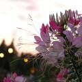 写真: ♪夕焼けのむこうには~(君の名は。170017)