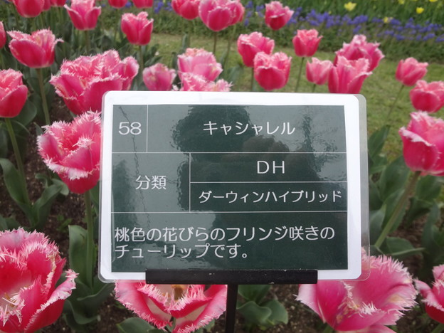 Photos: DSC09049