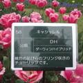 DSC09049