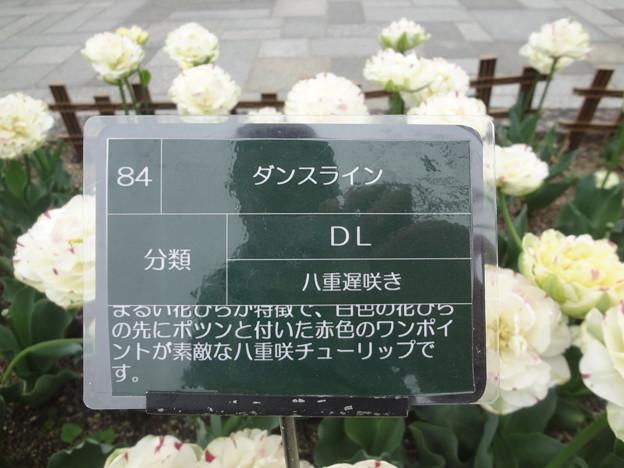 DSC09056