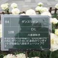 Photos: DSC09056