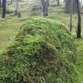 緑藻への祈り