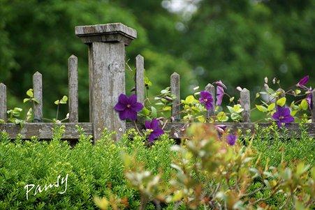 山手イタリア山庭園・・6