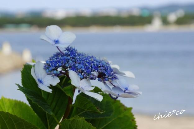 八景島-039