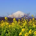 写真: 吾妻山公園-128