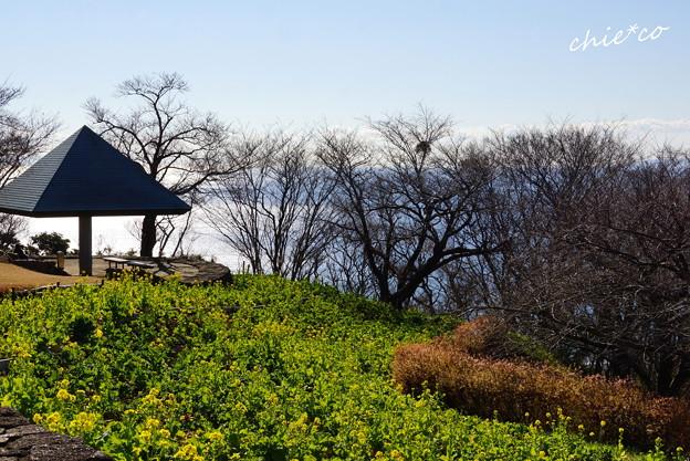 写真: 吾妻山公園-133