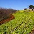写真: 吾妻山公園-135