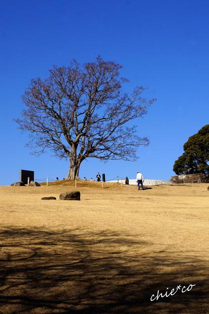 吾妻山公園-144