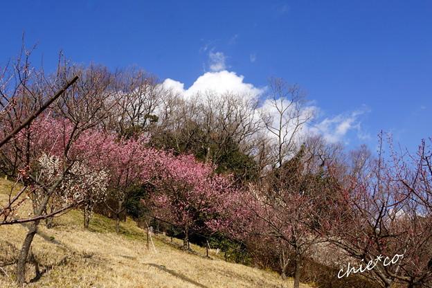 金沢自然公園-217
