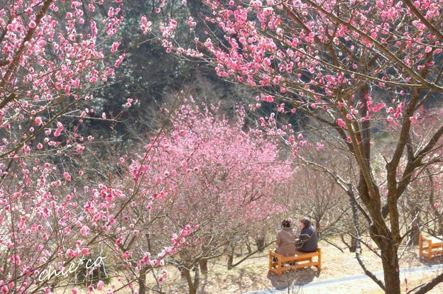 金沢自然公園-227