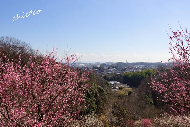 金沢自然公園-229