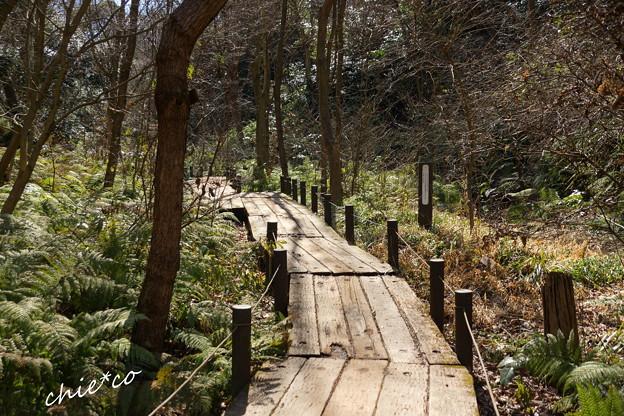 金沢自然公園-246