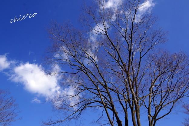 金沢自然公園-254