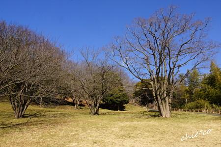 金沢自然公園-265