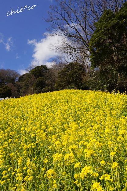 金沢自然公園-264