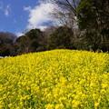 写真: 金沢自然公園-264