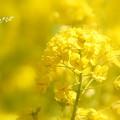写真: 金沢自然公園-284