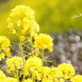 写真: 金沢自然公園-285