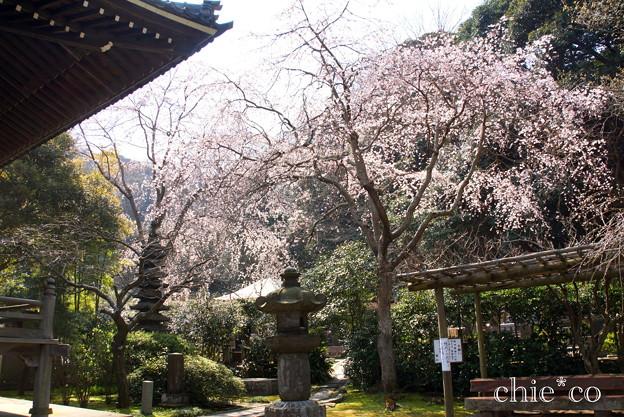鎌倉-311