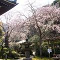 写真: 鎌倉-311