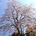 写真: 鎌倉-314