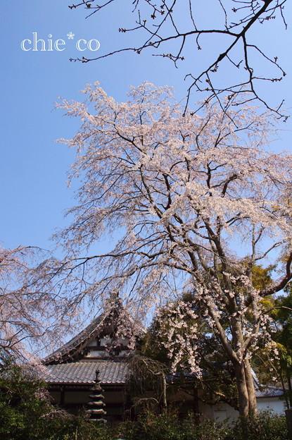 鎌倉-317