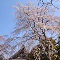 写真: 鎌倉-317