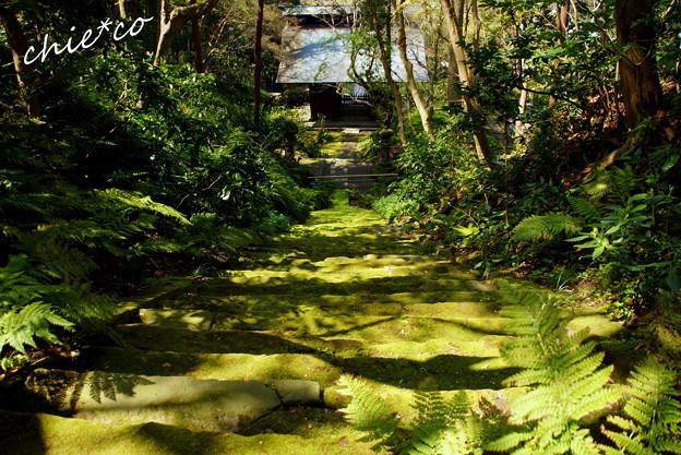 写真: 鎌倉-350