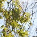 写真: 鎌倉-358